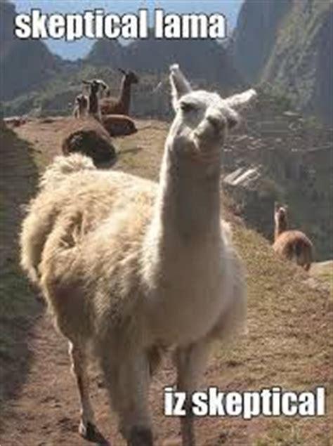 Alpaca Sheep Meme - 1000 ideas about alpaca funny on pinterest funniest
