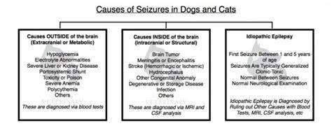 pug seizures brain 1 pug club of america