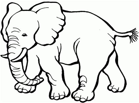 printable coloring pages preschool free printable elephant coloring pages for