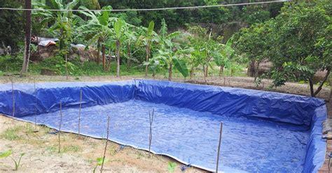 Kolam Besar Praktis Dan Murah semua bisa cara budidaya ikan nila merah di kolam terpal paling mudah dan praktis