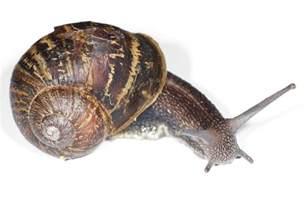 file garden snail jpg