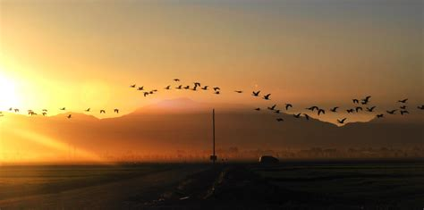 early morning flight by sharphotography on deviantart