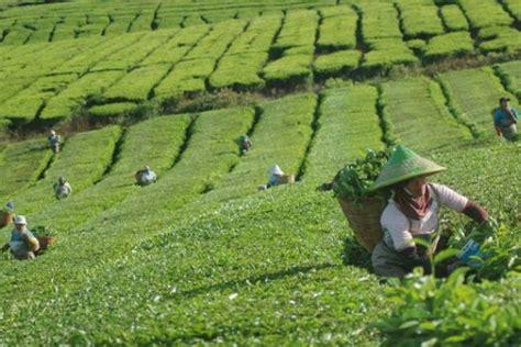 daftar ide usaha sampingan bidang agribisnis
