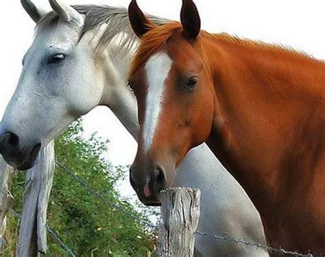 imagenes surrealistas de caballos pintura moderna y fotograf 237 a art 237 stica fotos de caballos