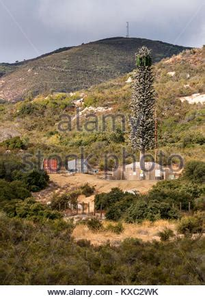 mobile phone cell tower disguised as a pine tree in the