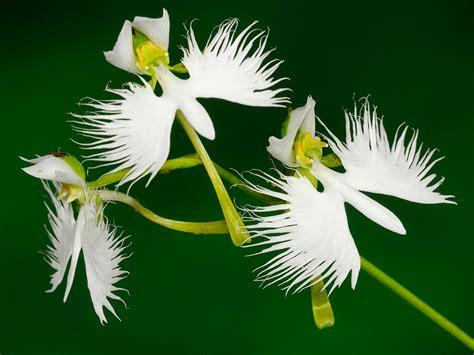 imagenes flores extraordinarias dibujos de flores ex 243 ticas del mundo im 225 genes de flores