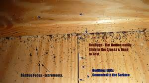 Bed bugs on a mattress bed bug feces eggs and nests behind bed upper