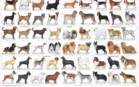 every breed every breed in the world simple image gallery