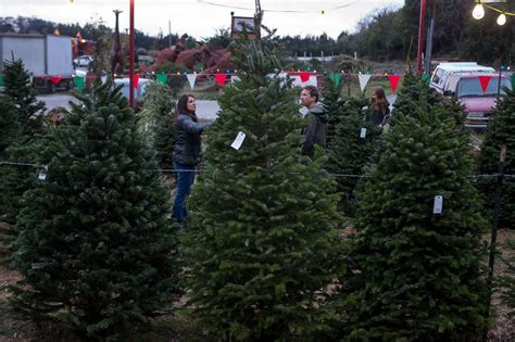 a christmas tree shortage is driving higher prices at lots