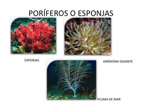 Imagenes De Animales Poriferos | animales invertebrados
