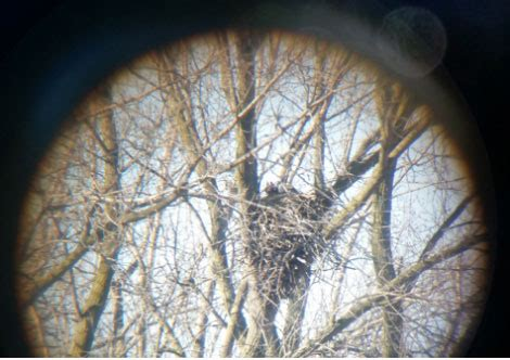 Kenosha County Records Dnr Confirms Active Bald Eagle Nest In Kenosha County West Of The I