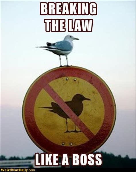 Stop Breaking The Law Meme - funny pictures weirdnutdaily break the law