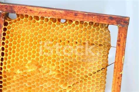 honeycomb pattern frame honeycomb in wooden frame stock photos freeimages com