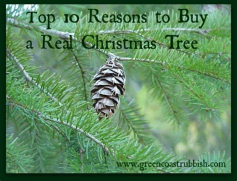 buy real tree 100 images why buy a real tree scottish