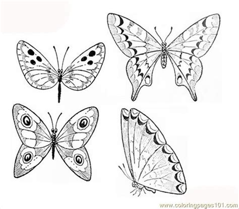 butterflies coloring page coloring page free beautifull