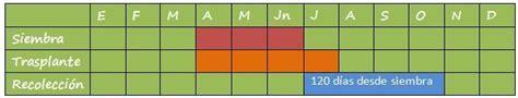 Calendario De Fertilizacion Cultivo De Melones Agrom 225 Tica