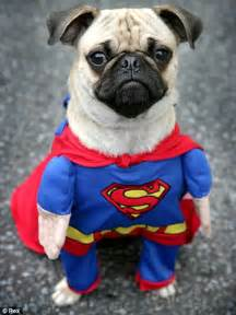 Superpug on a warm winter s day there s really no need for anything