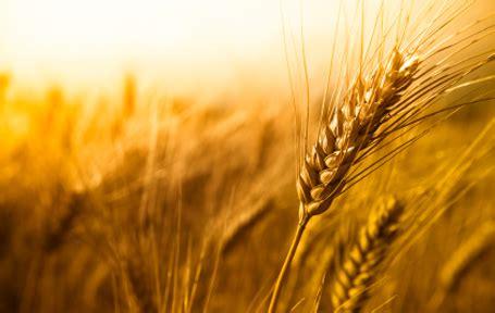 agricultural farmland in sub saharan africa   ezu like group
