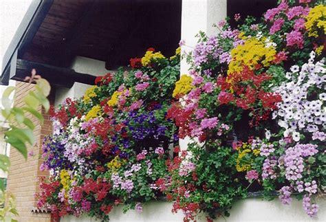 balconi invernali fioriti balconi fioriti chi siamo