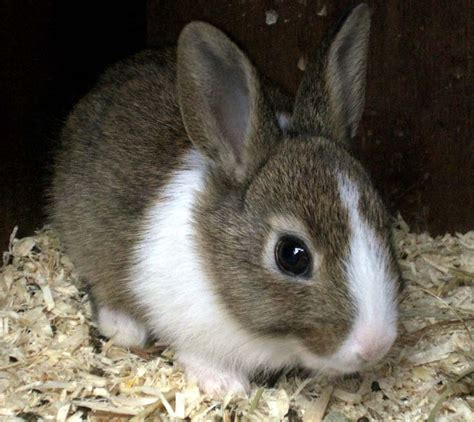 7 Tips On Caring For Baby Bunnies by Baby Rabbit Care Tips And Advices Inspirationseek