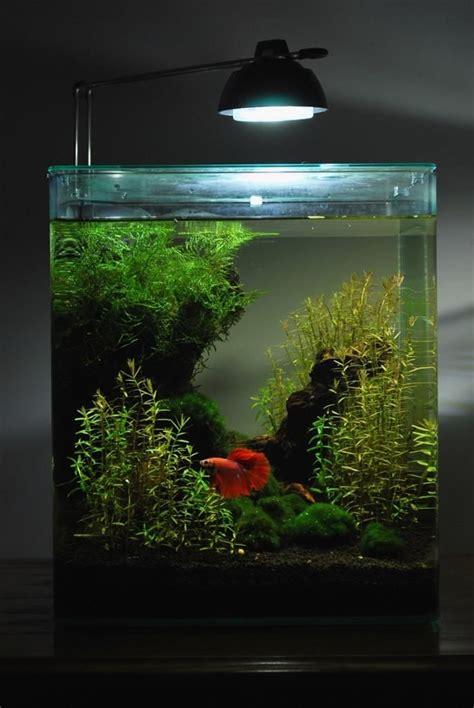 betta tank 25 best ideas about nano aquarium on pinterest betta