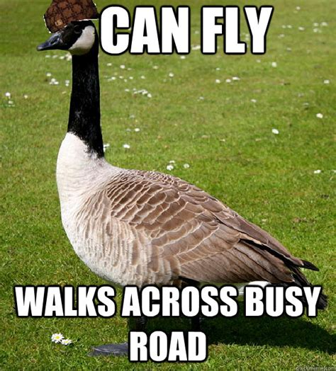 Silly Goose Meme - silly goose meme 28 images meme creator you silly