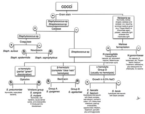 bacterial identification flowchart gram positive and negative bacteria flowchart gram