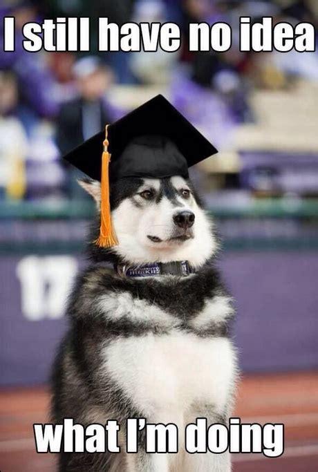 I Have No Idea What Im Doing Meme - i still have no idea what i m doing graduated dog