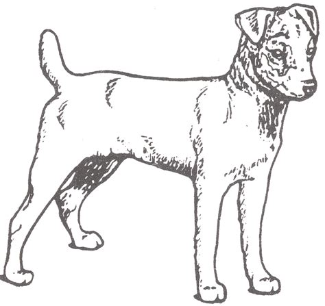 Free Coloring Pages Of Terrier Jack Russel Terrier Coloring Pages
