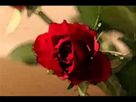 imagenes de te extraño con rosas una rosa para mi amor youtube