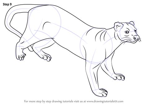 how to make doodle drawing learn how to draw a fossa animals step by step