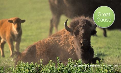Mall Of America Mystery Gift Card - donation for bison habitat world wildlife fund groupon