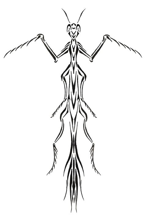 preying mantis tattoo 16 best preying mantis stencils drawings images on