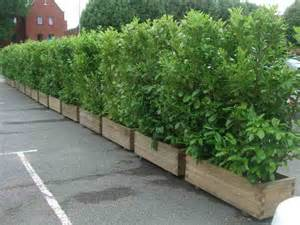 Large Plant Containers Gardening Landscaping Large Plant Container Ideas How