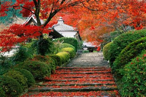 giardini famosi giardini giapponesi famosi i pi 249 belli mondo foto