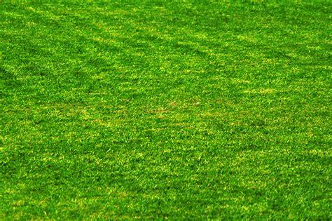 what color is grass grass wallpaper colors wallpapersafari