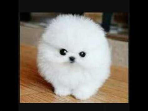 imagenes de animales lindos 7 imagenes de los perritos mas lindos y tiernos del mundo