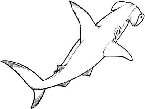 cartoon shark coloring page cartoon hammerhead shark cliparts co