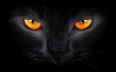 wallpaper black cat scary yellow eyes dark background