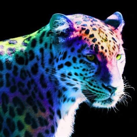 colorful leopard wallpaper colorful cheetah wallpaper wallpapersafari