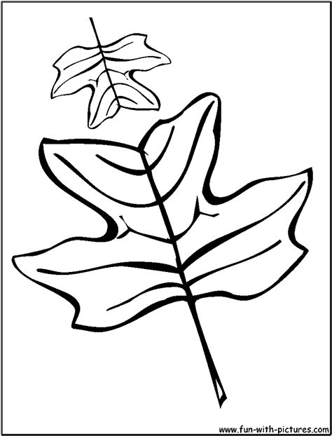 coloring pages oak leaf oak leaf coloring pages