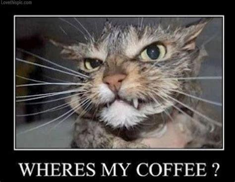 Funny Coffee Memes - wheres my coffe funny memes cat coffee meme mondays wait