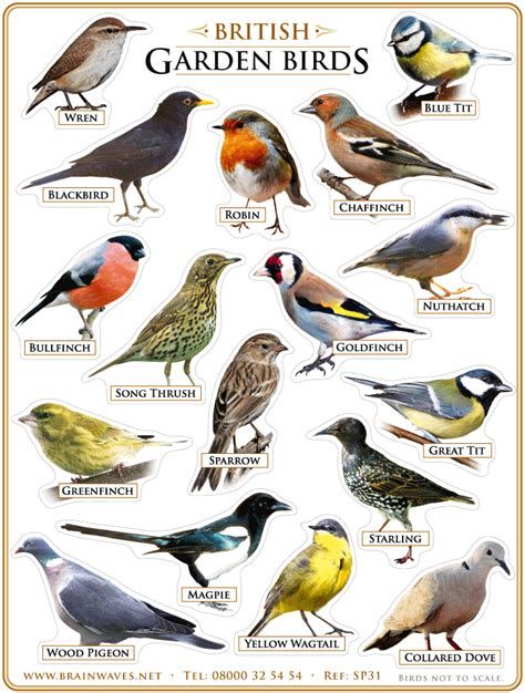 kinds of birds in your backyard 5 more things americans may not know about england