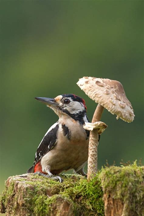 its mushroom looks like a beach umbrella birds and