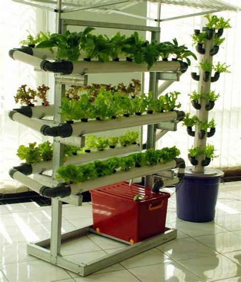 cara membuat tanaman hidroponik anggrek cara merawat tanaman dan aneka tanaman hias tanaman yang