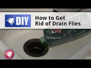 getting rid of bathroom flies how to get rid of drain flies drain fly kit with drain