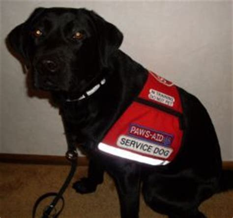 can service dogs in go anywhere anxiety service dogs and on