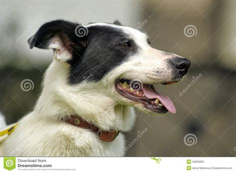 dogs with spots white with black spots stock photos image 33825833