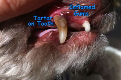 is gum bad for dogs bad breath in dogs causes of bad breath