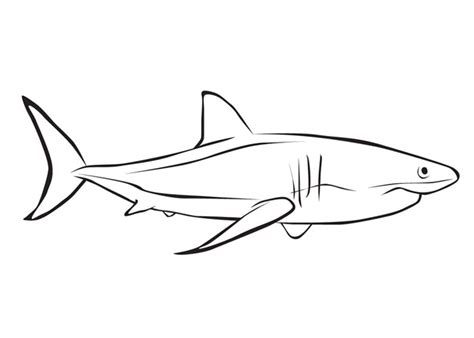 cartoon shark coloring page free coloring pages of shark teeth